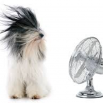 dog's hair blowing from a fan near apartment in wilmington de